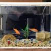 【いいモノ】プラスαしたい金魚飼育アイテム2選